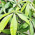 佑孳-植物[葉]的介紹