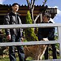 20080204~0207新竹新春集調杉林溪