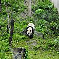 2010/04/02木柵動物園半日遊