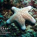 0227薄荷島潛水
