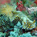20140628 基隆嶼潛水