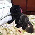 皮蛋小黑貓
