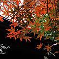 2010 楓京都-1115