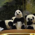 台北動物園二