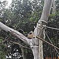 紐西蘭-奧克蘭動物園