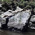 紐西蘭-米佛峽灣