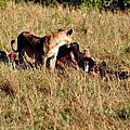 東非大自然---「肯亞馬賽馬拉三)」