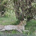 東非大自然---「肯亞馬賽馬拉(五)」