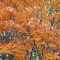 2008.10北海道-day 2
