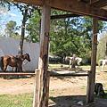 Horseback riding~