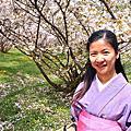 和服與櫻花