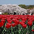 賀茂川+京都植物園+松崎疏水