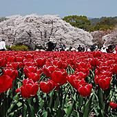 賀茂川+京都植物園+松崎疏水相簿封面
