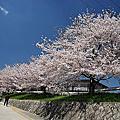 再訪賀茂川+上賀茂神社