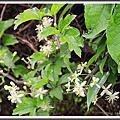 植物-毛茛科