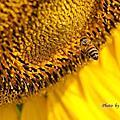 飛行中的蜜蜂