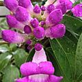 花兒花兒真美麗