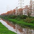埤頭木棉花道