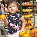 97.10.25新竹新埔柿餅