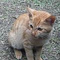 2010-12-04 猴硐貓村