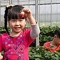 180218 中壢採草莓