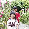 180405 蜀葵花