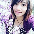 龜山大湖紀念公園紫藤花