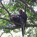 2004/08/01 爬壽山看猴子