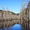 水漾森林の山水篇