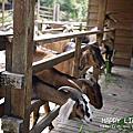 NO1‧羊世界&青松花卉農場