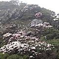 2012挑戰合歡山東峰