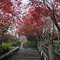 2012重遊太平山