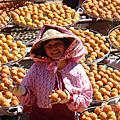 新埔黃橙橙的柿子