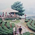 宜蘭玉蘭茶園