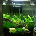 我家的魚缸~