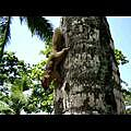 clubmed bali-squirrel.wmv