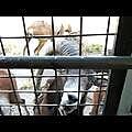 九州自然動物園2