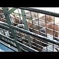九州自然動物園4