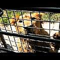九州自然動物園8