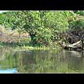 影片:會吃人的鱷魚就在小船旁游著