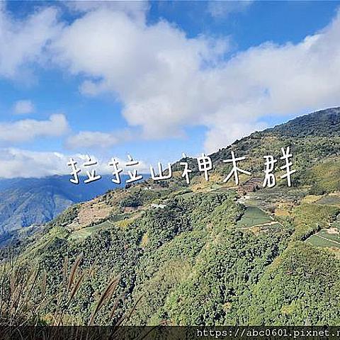 【桃園】健行筆記|海拔1600公尺!走吧!拉拉山神木群步道