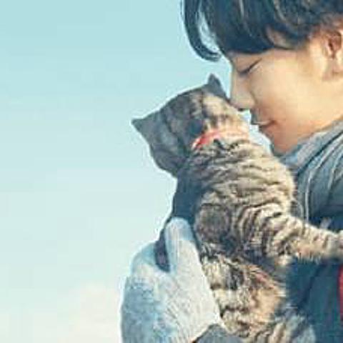 影評《如果這世界貓消失了》-以輕盈緩和的筆調寫出最真摯的哲理。