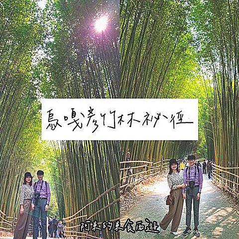 【東食】烏嘎彥竹林|苗栗景點推薦:不輸日本京都嵐山!絕美「竹林祕境步道」感受與世隔絕的幽靜之美
