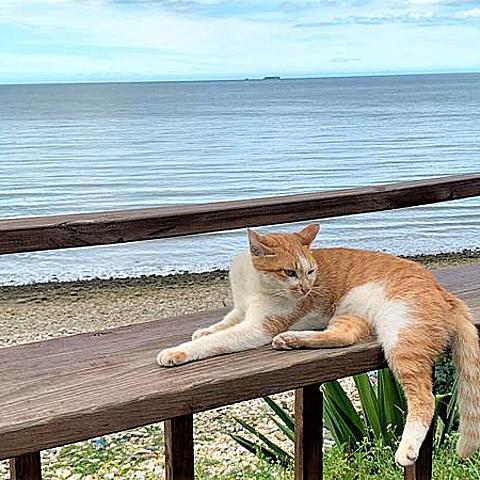 【新北-景點】藍色公路海景咖啡館♥林口夕陽海景/約會景點推薦/看海、散心約會一日遊